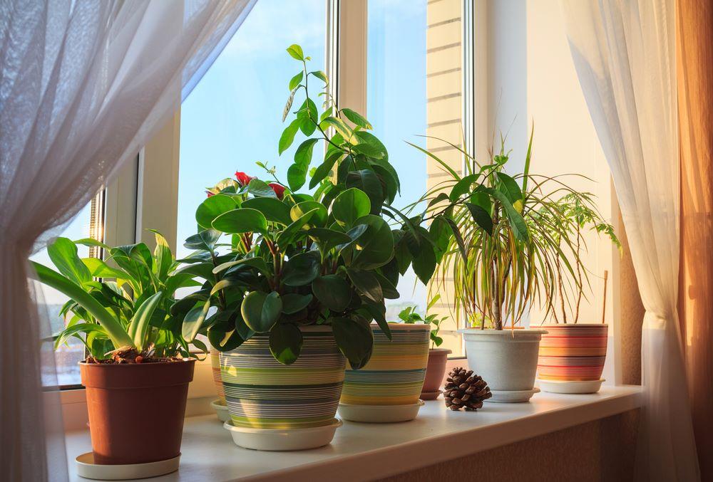 Planters and Indoor Plants