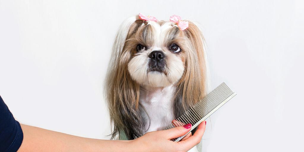 Benefits of Pet Grooming