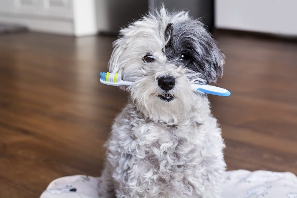 Get a Dog Toothbrush