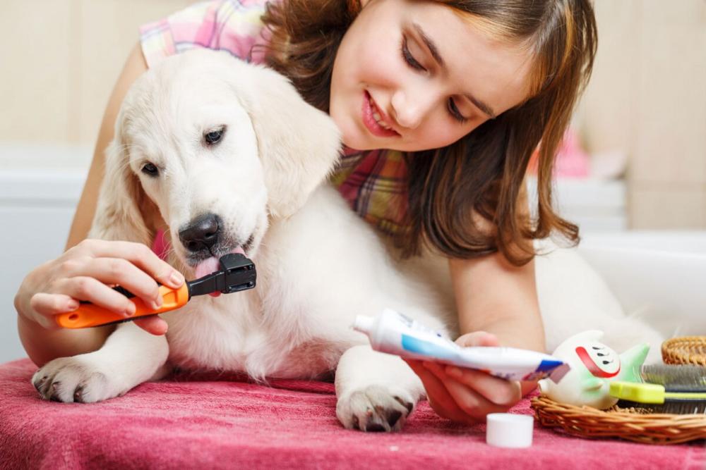 Other Dog Dental Care Options