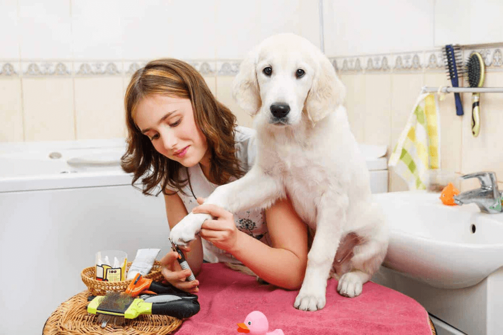 Pets Also Need Pampering