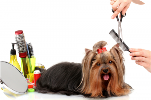 booking-grooming-appointments