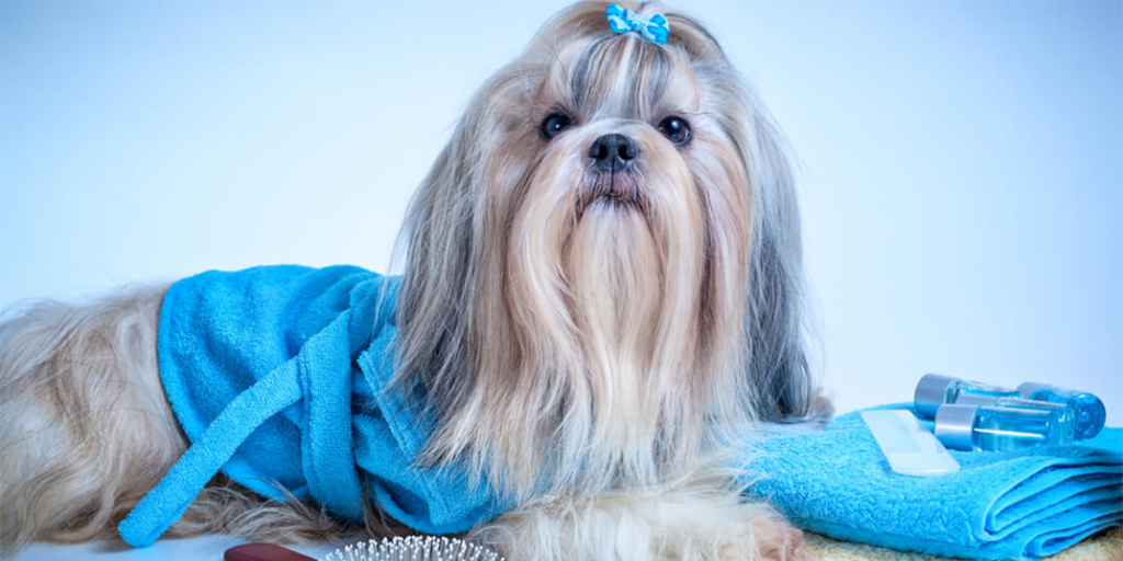 5 Unique Ideas To Avoid Pet Grooming Expenses