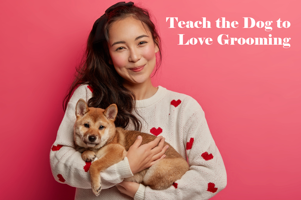 Teach Dog to Love Grooming